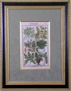 The Kitchen Garden  507 (Root Vegetables)