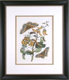 Plate IX.  Palissade.  (Butterfly)
