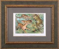 Pl. IX Carnovora.  Japanese Panther, Ocelot, Cougar, Jaguar