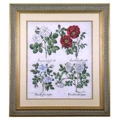 Rosa (Roses)