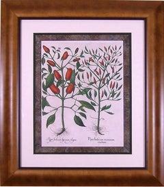 Piper Indicum (Pepper)