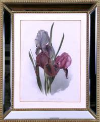 Hybrid Iris