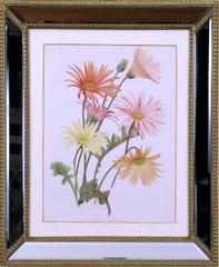 Hybrid Gerbera  (Daisy)