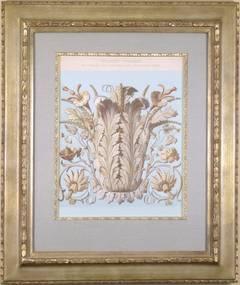 Pflanzen-Ornament