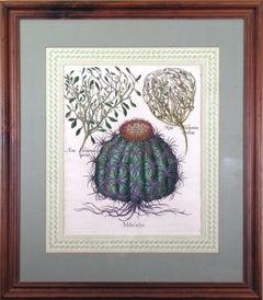 Melocactos Melocactus (Cactus)