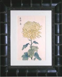Chrysanthemum Yellow B