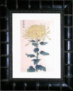 Chrysanthemum Yellow A