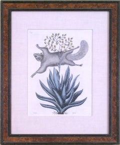 Sciurus (Bushy-tailed Squirrel)
