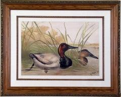 Canvasback Duck