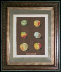 Plate 88.  Apples.