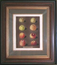 Plate 91.  Apples.