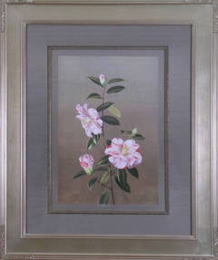 "Camellia ""Paul Jones Supreme"""