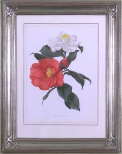 Single Camellias