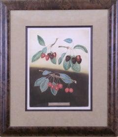 Cherries.  Plate IX.