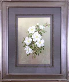 Rosa Nevada (Rose)