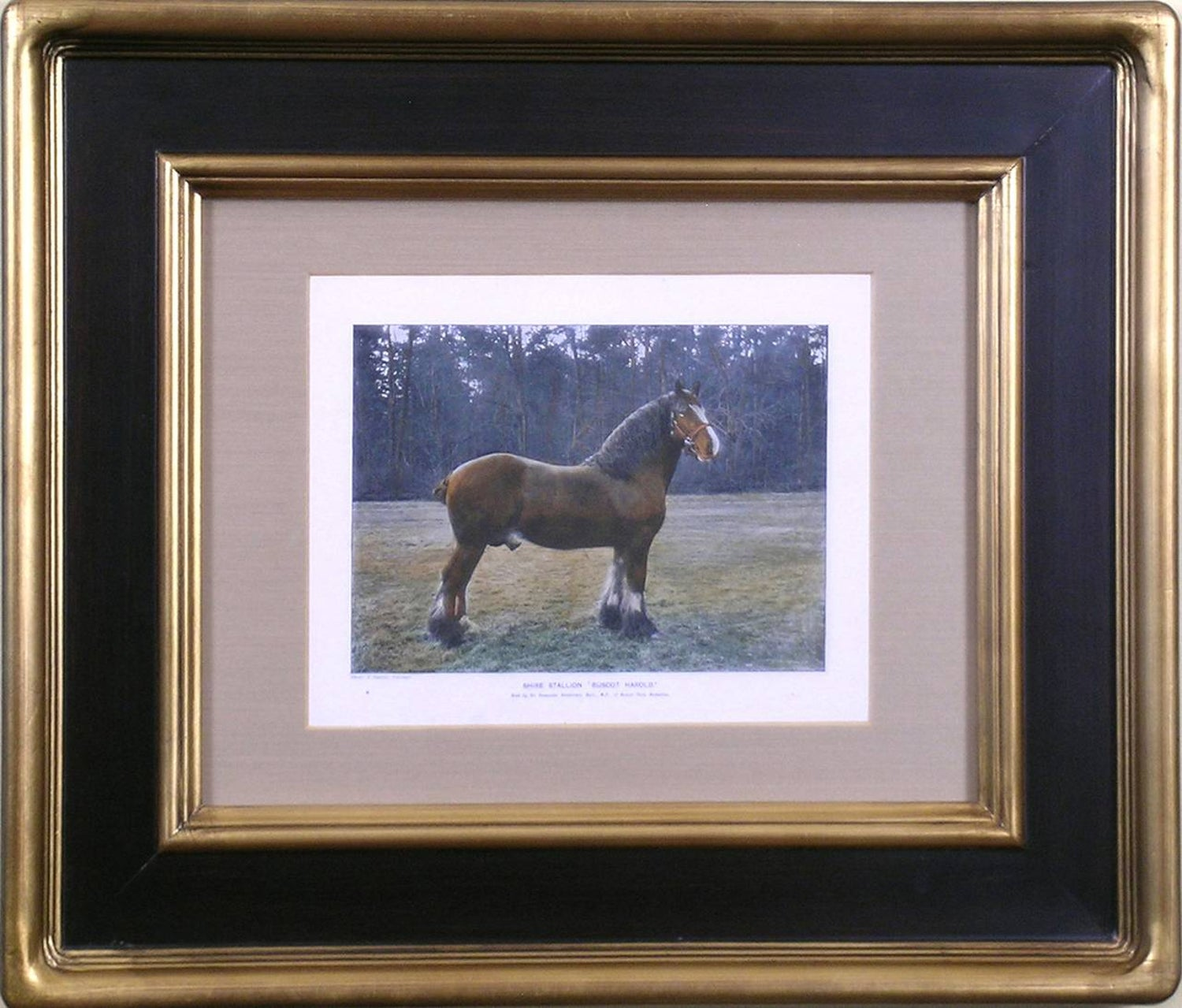 Samuel Sidney The Shire Stallion For Sale At 1stdibs