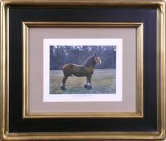 The Shire Stallion