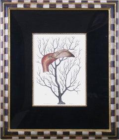 Caput Phaenicopteri & Keratophyton (Flamingo Head with Coral)