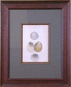 Cardium.  Plate 53 (Shells)
