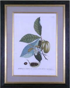 Anona (Pawpaw Fruit)