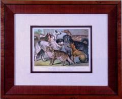 Plate XIV. Carnivora. Newfoundland, Greyhound, Thibet Mastiff