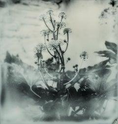 Botanic, 50x50cm