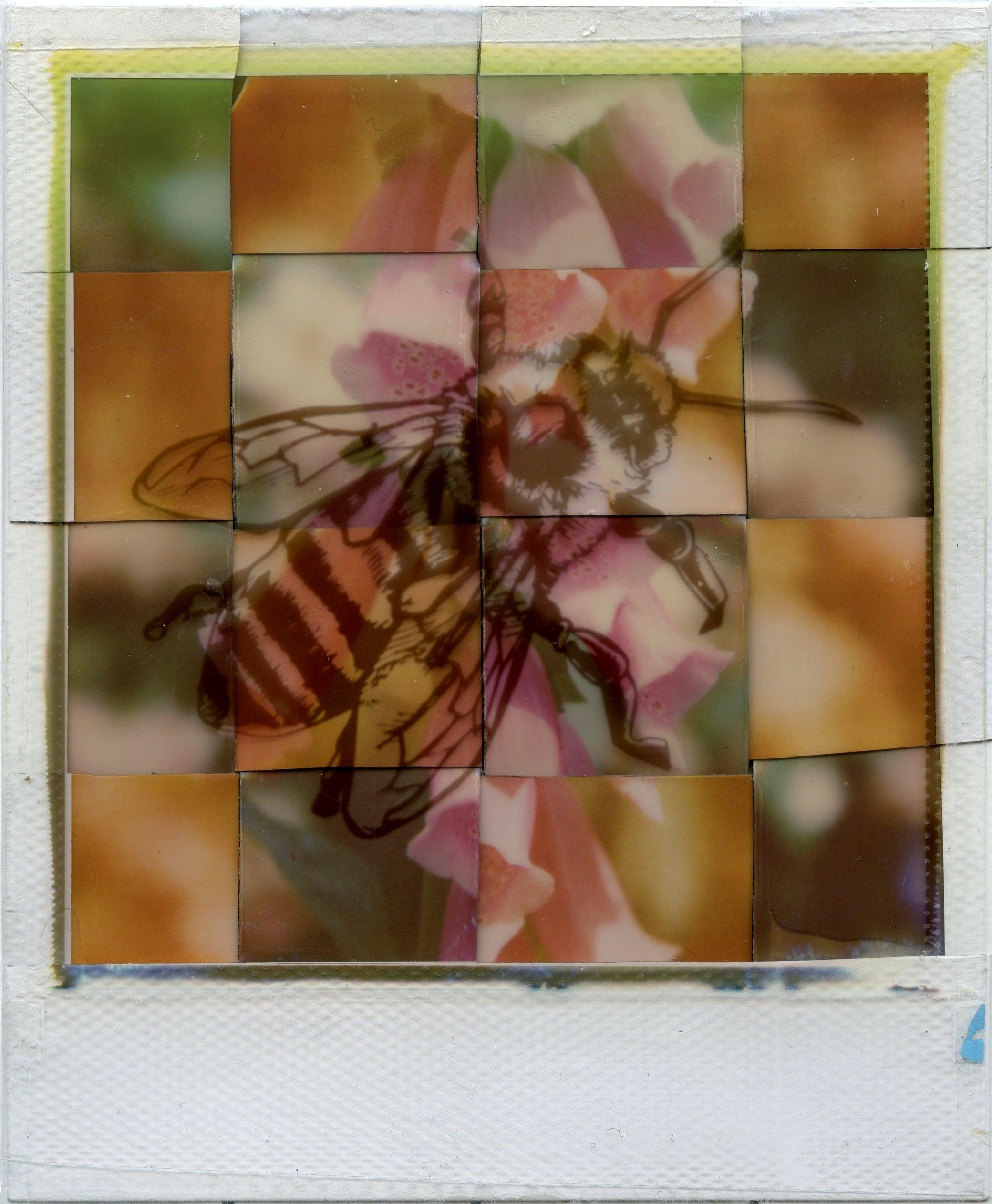Generation A - Contemporary, Polaroid, Photograph, Bees, Abstract, Color