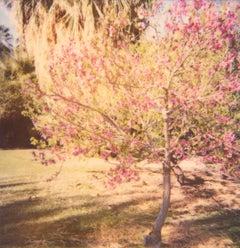 Cherry Tree Blossoms - Contemporary, 21st Century, Polaroid, Landscape Photo