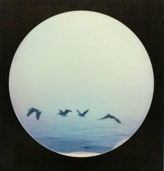 Pelican Party, 21st Century, Polaroid, Landscape Photography