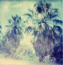 Blue Sky Palm Trees, Contemporary, 21st Century, Polaroid, Landscape Photography