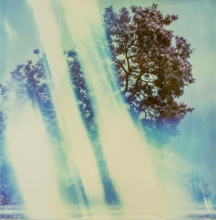 Tree of Light, 21st Century, Polaroid, Landscape, Photography, Contemporary