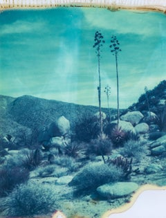 Botanicals I, 21st Century, Polaroid, Landscape Photography, Contemporary