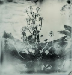 Botanic - Contemporary, Nature, Woman, Polaroid, Photograph