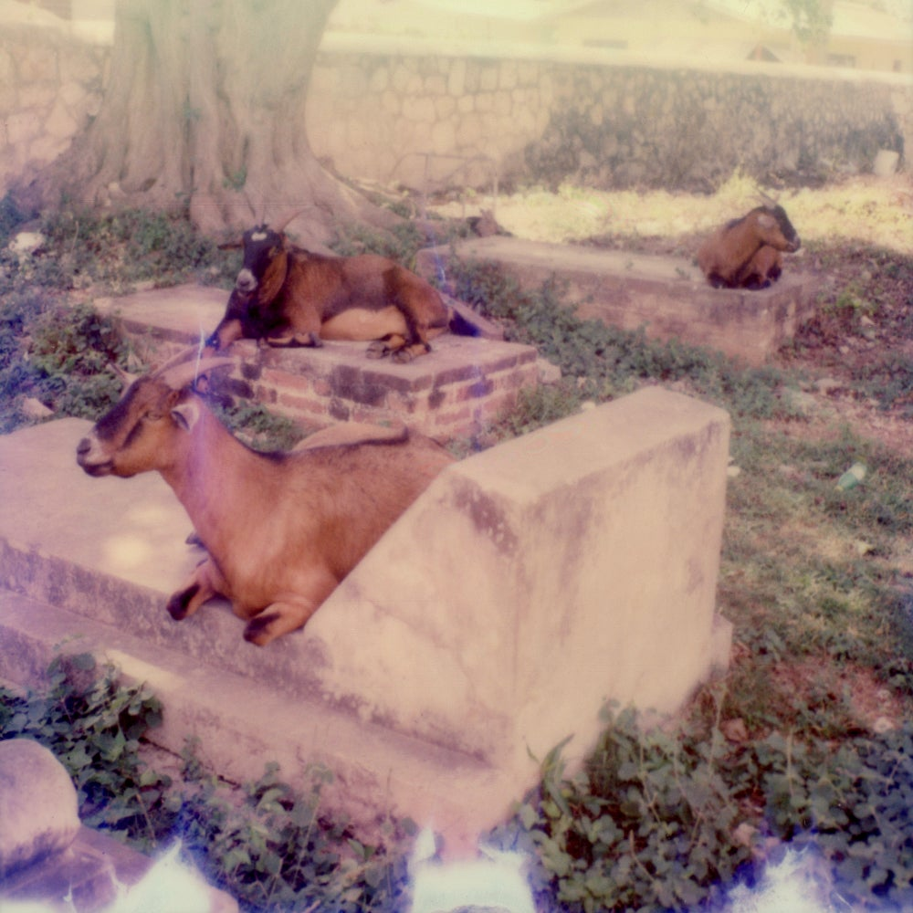 Graveyard Goats - Contemporary, Polaroid, 21st Century, Landscape