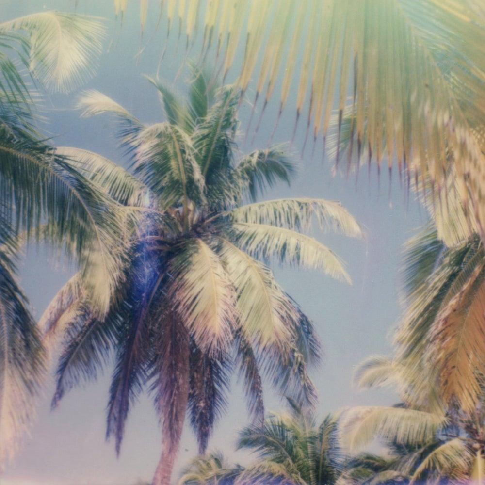 Palm Window - Contemporary, Polaroid, 21st Century, Photography, Landscape