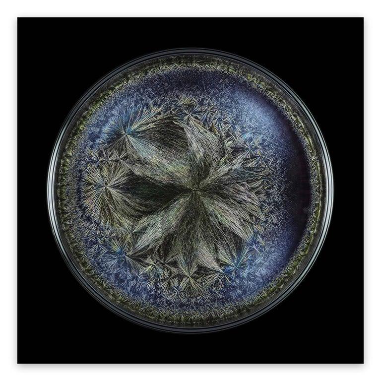 Seb Janiak Abstract Photograph - Morphogenetic field - Beluga Caviar (Large)