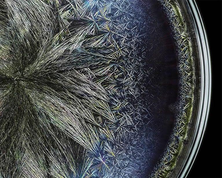 Morphogenetic field - Beluga Caviar (Large) - Abstract Photograph by Seb Janiak
