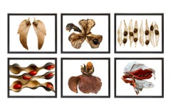 Set of six limited edition prints from Dispersal