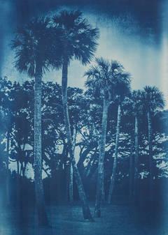 Ribault Palms - 2