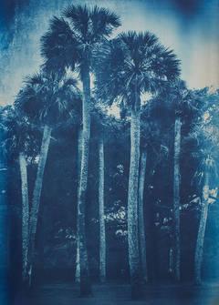Ribault Palms