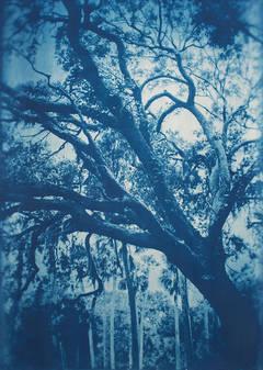 Ft George Island Live Oak
