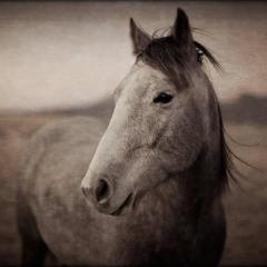 Horse Portrait - 2, 1/10, 2016