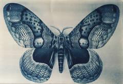 Wing Study - Moth - 2, 1/12