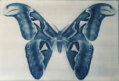 Wing Study - Moth - 1, 1/12