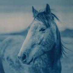 Horse 3, 1/12