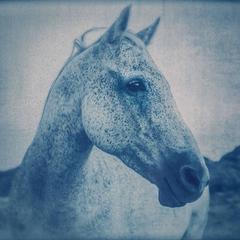 Horse 1, 1/12