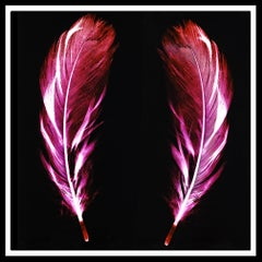 Flight of Fancy - Electric Pink Feathers