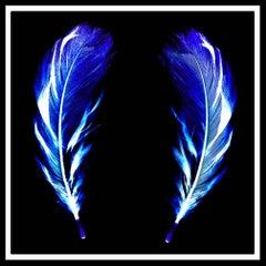 Flight of Fancy - Electric Blue Feathers