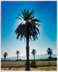 Palm Tree, Salton Sea, California