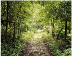 "Beatles Path, 40""x50"" limited edition photograph"